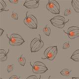 Modele com Physalis dos frutos ilustração stock