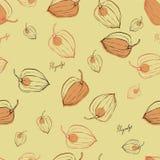 Modele com Physalis dos frutos ilustração do vetor