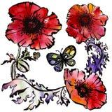 Modelez avec des fleurs pavot et papillon Photo libre de droits