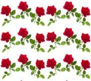 Modelez la rose de rouge sur une tige des feuilles vertes Photo libre de droits