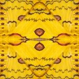 Modelez la texture de l'aile en soie jaune et rouge G de papillon du Sikkim Photos libres de droits