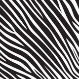 Modelez le safari de jungle blanc de noir de rayure de zèbre de tigre de texture illustration de vecteur