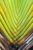 Modell av bananen som slagbakgrundstextur Royaltyfri Fotografi