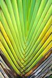 Modell av bananen som slagbakgrundstextur Royaltyfri Bild