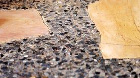Modell av cementgolvet royaltyfria bilder