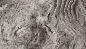 Modell av cirklar av ett träd arkivfoton