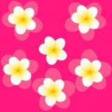 Modell av den vita jasminblomman med den gula mitten med skugga på rosa bakgrund vektor illustrationer