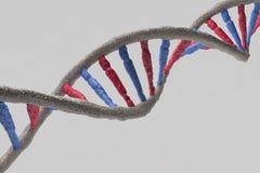 Modell av DNAstrukturen Arkivfoton