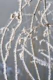 Modell av frost på gräset vektor för illustration för abstraktionjuldesign Arkivbild