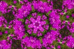 Modell av ljusa purpurfärgade blommor kalejdoskop mandala Arkivfoto