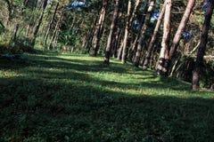 Modell av naturträdbakgrund Gröna Forest Environment arkivfoton