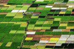 Modell av ricefield Royaltyfri Foto