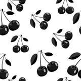 Modell av stilkonturn för svart körsbär med sidor på vit bakgrund Royaltyfria Foton