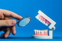 Modell av tänder Royaltyfri Fotografi