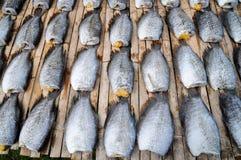 Modell av torra fiskar Arkivbilder