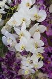 Modell bland orkidér blommorna i trädgård Royaltyfria Foton
