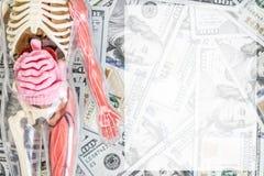 Modell des menschlichen Körpers mit dem Skelett und den inneren Organen über US-Dollar Geldhintergrund Medizinische Siebung Esima stockbild