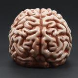 Modell eines Gehirns Stockfotos