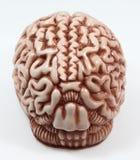 Modell eines Gehirns Lizenzfreies Stockfoto