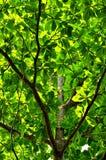 Modell för abstrakt begrepp för trädfilial Royaltyfri Foto