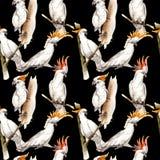 Modell för ara för himmelfågel vit i ett djurliv vid vattenfärgstil royaltyfri illustrationer