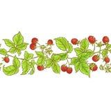 Modell för Aspberry filialvektor vektor illustrationer