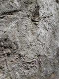 Modell för bakgrund för textur för trädskäll Arkivfoton