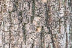 Modell för bakgrund för textur för trädskäll Arkivfoto