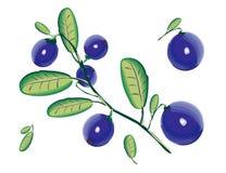 modell för blåbäreps-mapp Arkivfoto