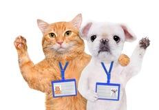 Modell för emblem för hund- och kattklädermellanrum vit arkivfoto