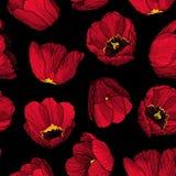 Modell för färgpulver för vektordiagram hand-dragen sömlös av den röda tulpan Arkivbild