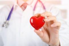 Modell för hjärta 3D för kardiolog hållande Arkivfoto
