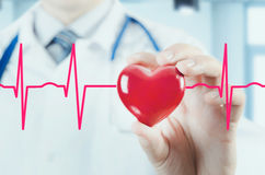 Modell för hjärta 3D för kardiolog hållande Begrepp med kardiogrammet Fotografering för Bildbyråer