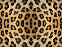 Modell för leopardpälskalejdoskop Fotografering för Bildbyråer