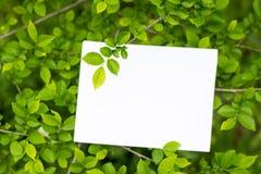 Modell för pappers- kort på gröna sidor Sommarbakgrund med kopieringsutrymme arkivbilder