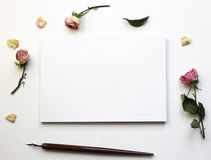 Modell för presentationer med torra rosor Royaltyfria Foton