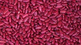 Modell för röda bönor som bakgrund Arkivbild
