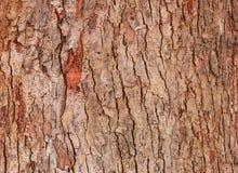 Modell för textur för trädskäll wood skal för bakgrund royaltyfri bild