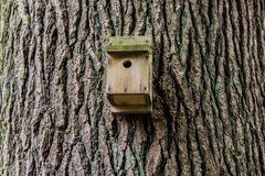 Modell för trädstam Royaltyfria Foton