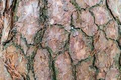 Modell för trädstam Royaltyfri Foto