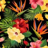 Modell för tropiska blommor för vattenfärg sömlös Blom- hand dragen bakgrund Exotisk blommande Hibiskus blommadesign royaltyfri illustrationer