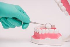 Modell för undersökning för tandläkarebruksspegel tand- eller tandmodell royaltyfria bilder