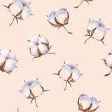 Modell för vattenfärgbomullsblommor på ljus - rosa backgro Royaltyfri Fotografi
