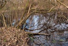 Modell för vattenskogspegel Arkivfoto