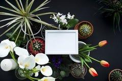 Modell f?r bildram Kaktuns, suckulenta v?xter, tulpan och dekorativt vaggar ovanf?r sikt royaltyfri fotografi