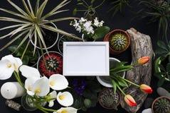 Modell f?r bildram Kaktuns, suckulenta v?xter, tulpan och dekorativt vaggar ovanf?r sikt royaltyfri foto