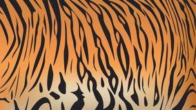 Modell för band för Bengal tiger Arkivbild
