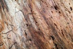 Modell i en gammal rutten trädstam Arkivfoto