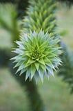 Modell i natur från apaträd arkivfoto