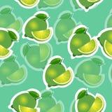 modell kalka och sidor och slises samma format på turkosbakgrund Stordialimefrukt Royaltyfria Foton